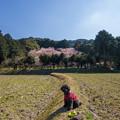 Photos: 初御代桜とレオン♪