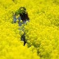写真: 道の駅原鶴の菜の花♪