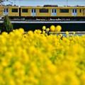 写真: YELLOW HAPPY TRAIN
