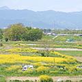<入間川*河川敷耕作地 in 2009>