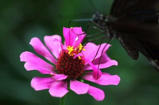 Photos: 蝶のランチ