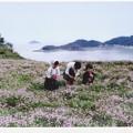 写真: 海が見えるレンゲ畑にて