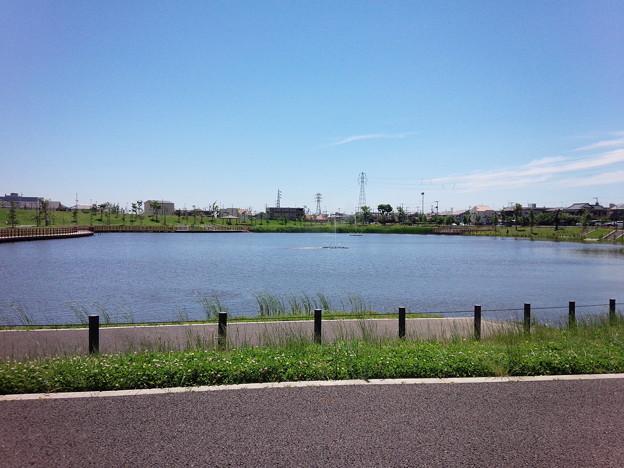 上総更級公園1 2015-6-4