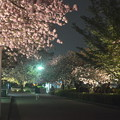 夜桜・ライトップ