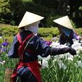 Photos: 菖蒲園