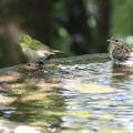 仲良く水遊び