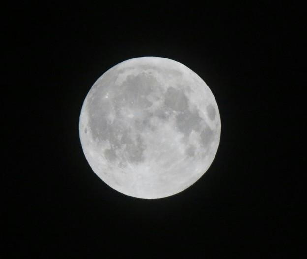 中秋のお月様