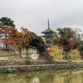 Photos: 奈良の紅葉