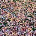 カラフルな落葉