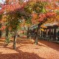 Photos: 晩秋の紅葉