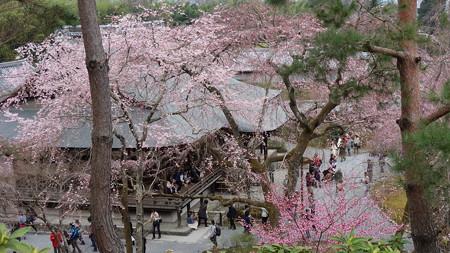 天龍寺の桜を上から見れる場所