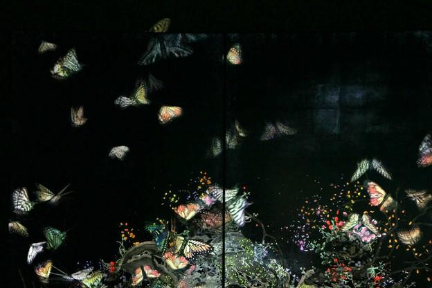 写真: 茨城県北芸術祭 126  チームラボ