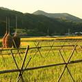 Photos: 茨城県北芸術祭 434  藁ぼっち