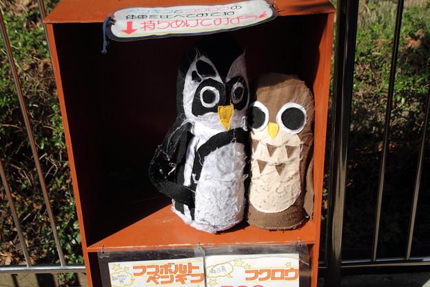 ペンギン、フクロウ