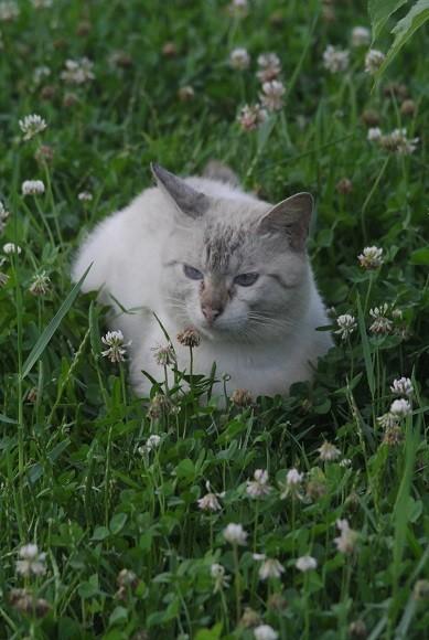 夕涼みの猫