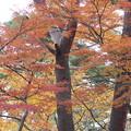 28.11.14双観山の紅葉