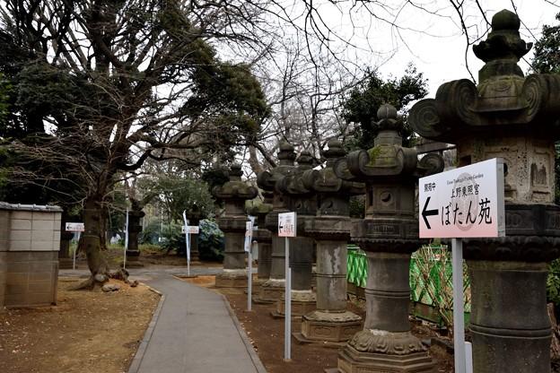 写真: 170209上野公園 (2)