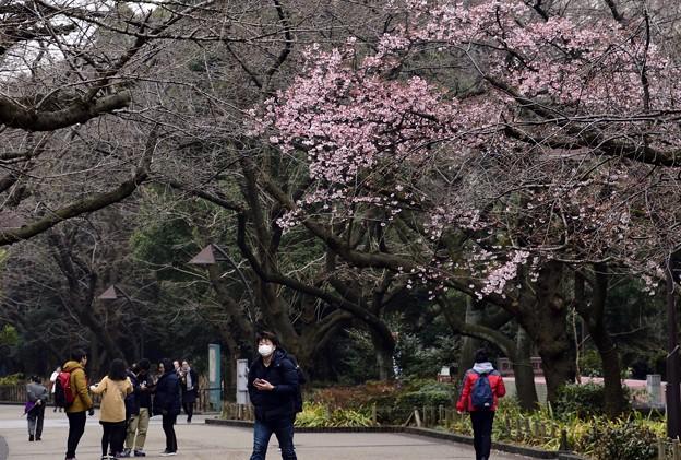 写真: 170209上野公園 (19)