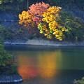 写真: 湖面を染めて