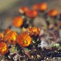 写真: 秩父の春は紅色に
