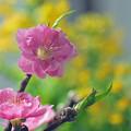 写真: 春へのおさそい