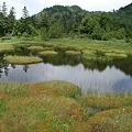 モウセンゴケの四十八池