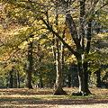 Photos: 舞い散る木の葉
