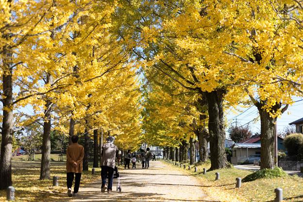 秋のさんぽ道