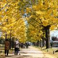 写真: 秋のさんぽ道