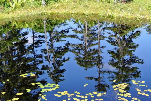浮島湿原の鏡