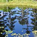 Photos: 浮島湿原の鏡