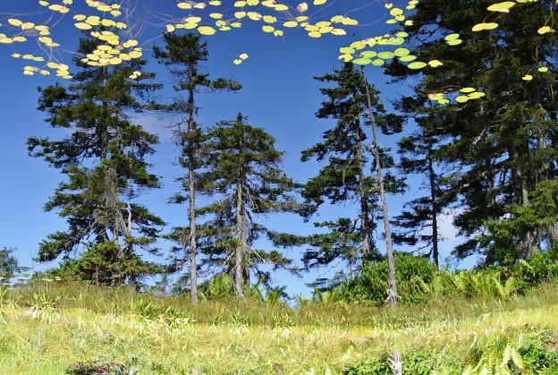 浮島湿原の鏡 上下反転