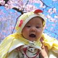 Photos: 孫と桜