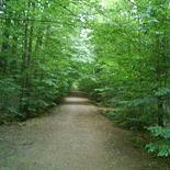 スウェーデンの森
