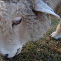 Photos: 16ありがとう六甲山牧場
