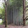 緑三昧・竹林