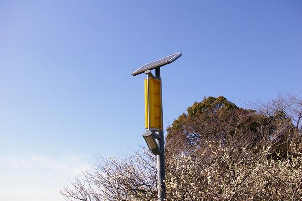 梅と発電塔