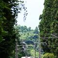 Photos: 日光杉並木