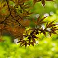 夏の新緑.2