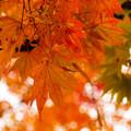 写真: 深まる秋.5