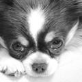 Photos: 忠犬ハチ公が渋谷駅前で衰弱死 1935年3月8日