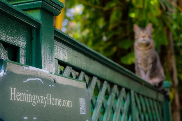 ヘミングウェイが愛した猫