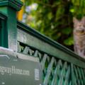 写真: ヘミングウェイが愛した猫