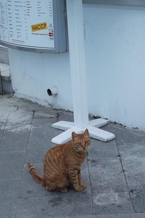 ラルナカのネコ0621