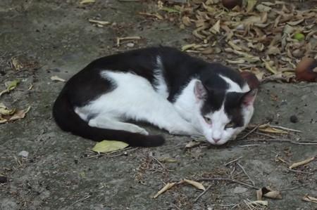 リマソールのネコ0630
