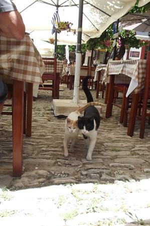 オモドスのネコ0630