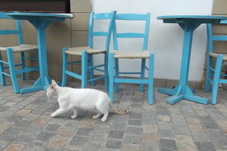 ラルナカのネコ0722