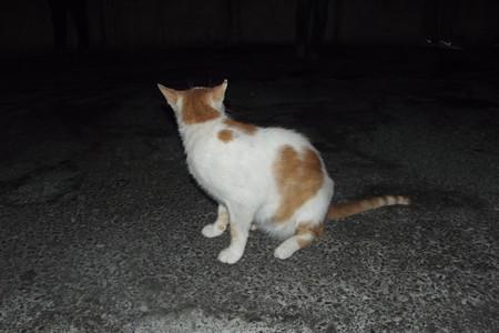 ドーハのネコ0727