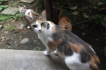 ミケママ&子ネコ0823