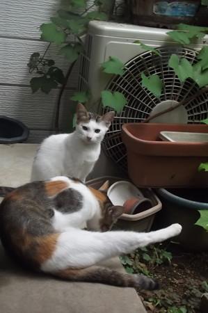 ミケママ&子ネコ0828